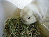 plopp is tasting new hay